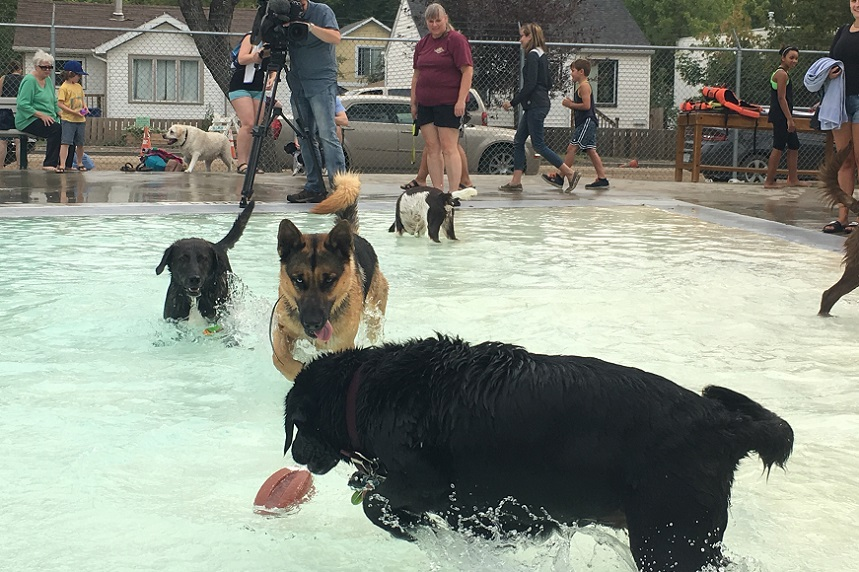 Dogs take over Mayfair pool for summer swim