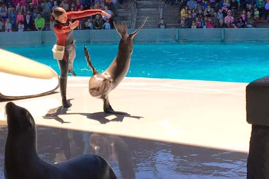Animal cruelty charges dropped against Marineland