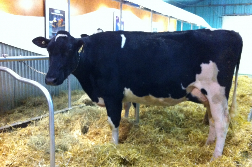 U of S researchers take on cattle diseases