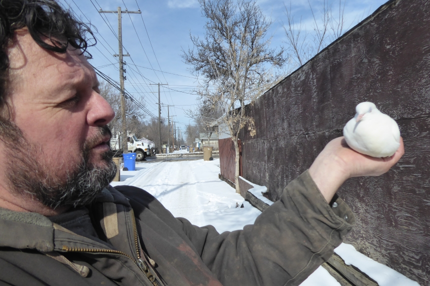 City orders dozens of pigeons to be removed from Regina home