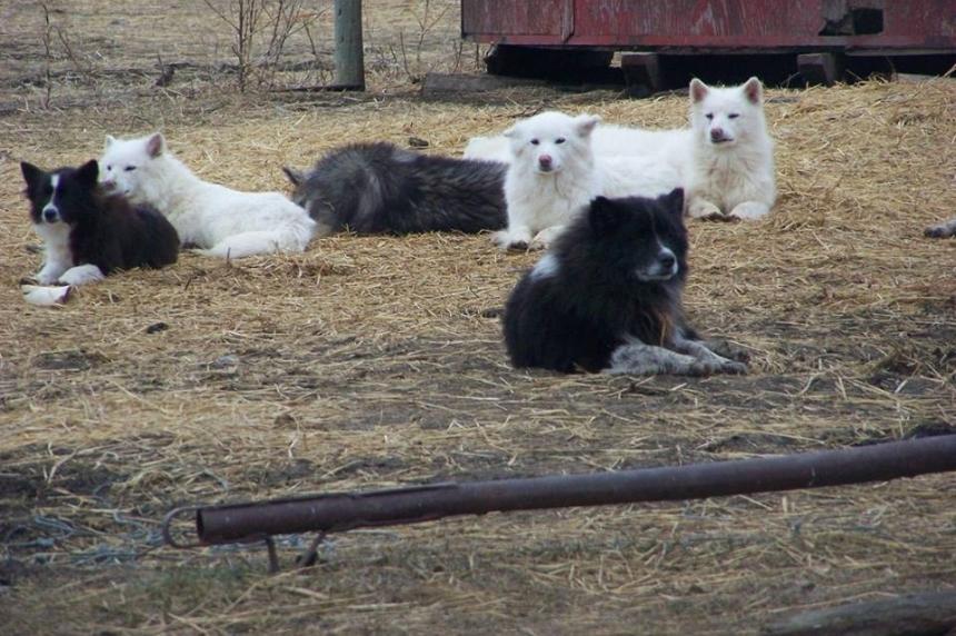 70 dogs seized on farm near Riceton, Sask.