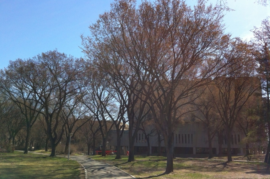 UPDATE: Dutch Elm Disease pops up in Saskatoon for the 1st time