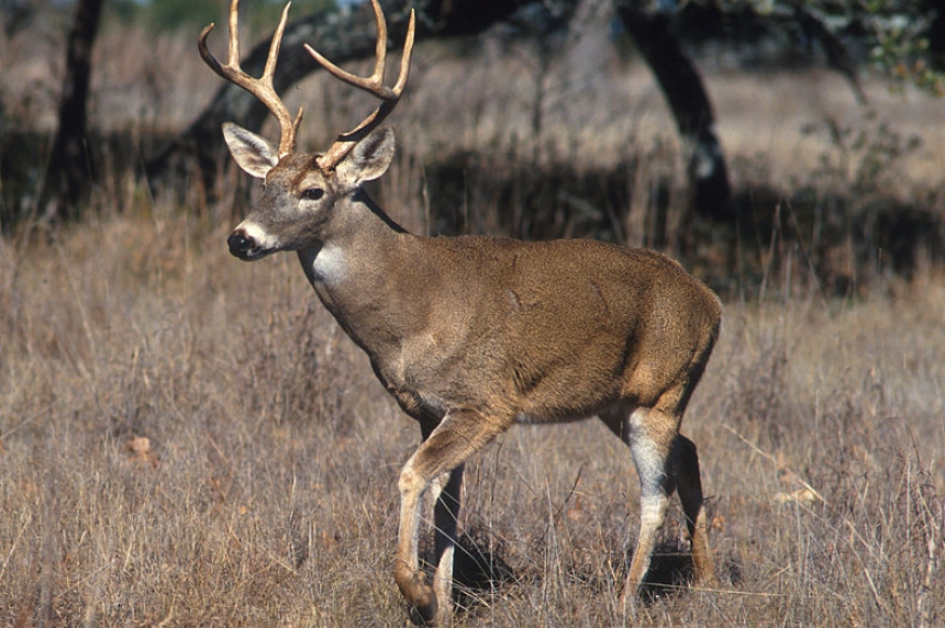 Saskatchewan introduces new wildlife regulations