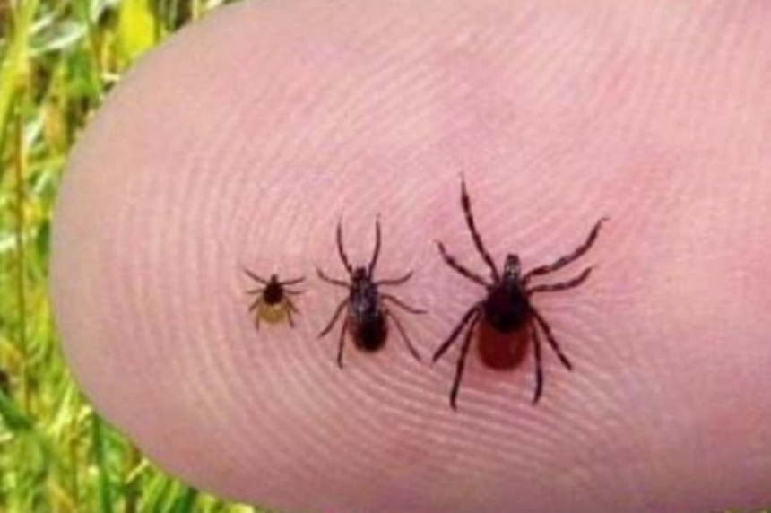 Health region warning public about ticks in the Battlefords