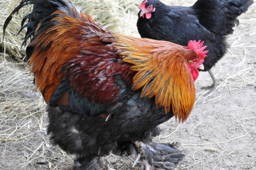 Dalmeny care home hired chicken farm to destroy documents