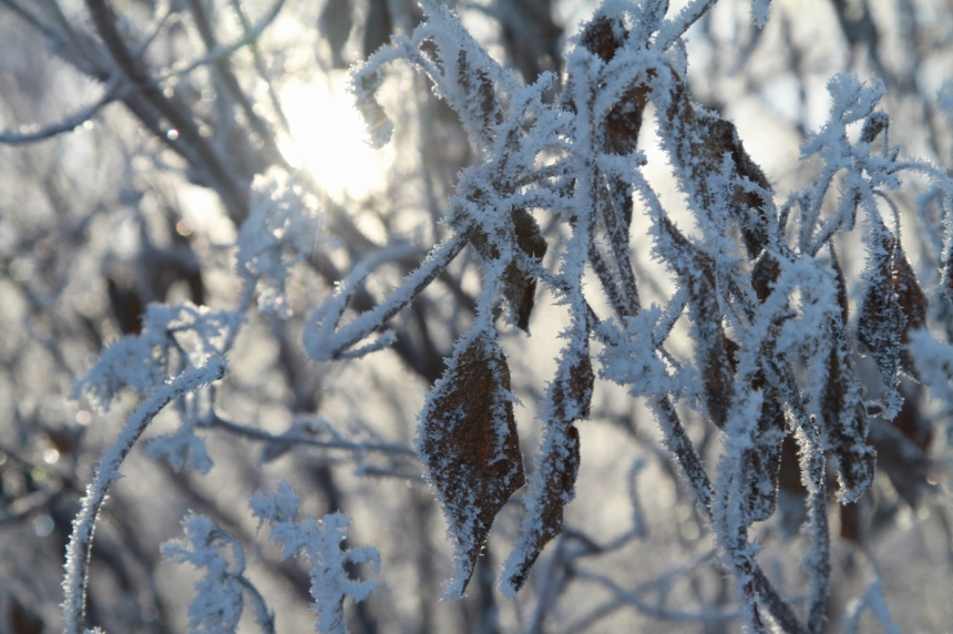 Cold in Sask. persists, warm up expected for coming week