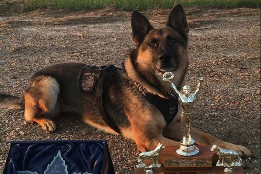 Sask. police dog sniffs out win at national competition