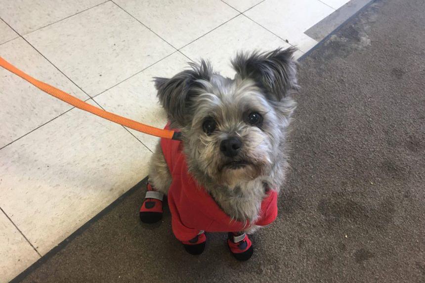 Saskatoon pet stores suggest winter gear for pups