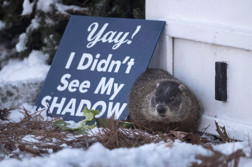 Groundhogs, woodchuck weigh in on upcoming weather