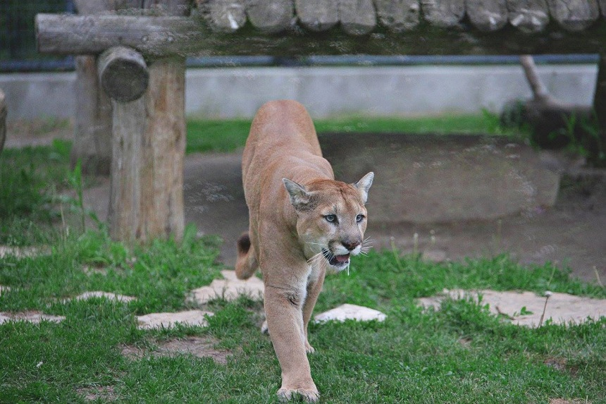 Help wanted: Forestry Farm continues search for zookeeper