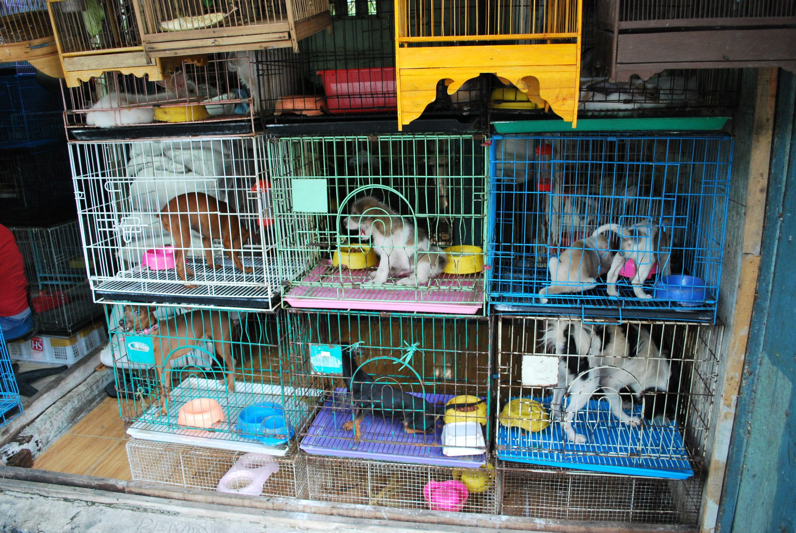 You Can't Buy Dogs, Cats or Bunnies From Vancouver Pet Stores Anymore