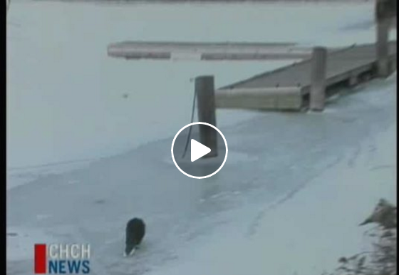 Need a good laugh? This 4ft beaver story should do the trick!