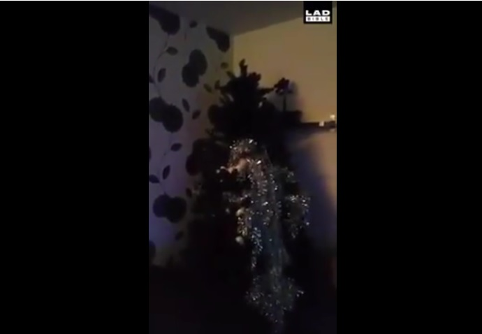 How to properly decorate a Christmas tree...