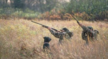 Hunting Licences Available Online Now