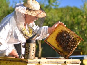 Urban Beekeeping Bylaw Planned