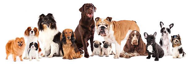 Smartest (and least smartest) dog breeds