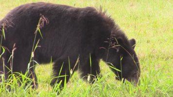 Lavington Bears Video!
