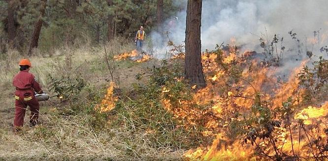 Wildfires Update: Major Drop In Evacuees