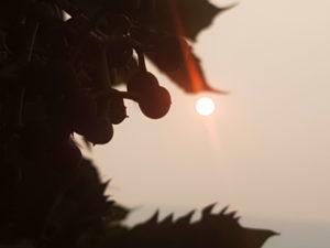 sun-now1