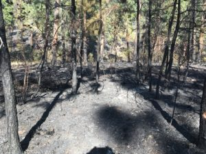 Fires Take Toll on Timber