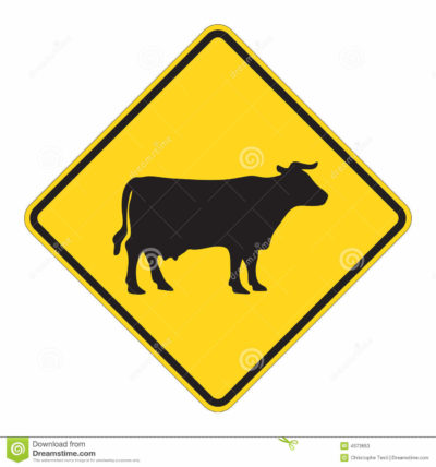 Caution: Cars and Cows Don't Mix