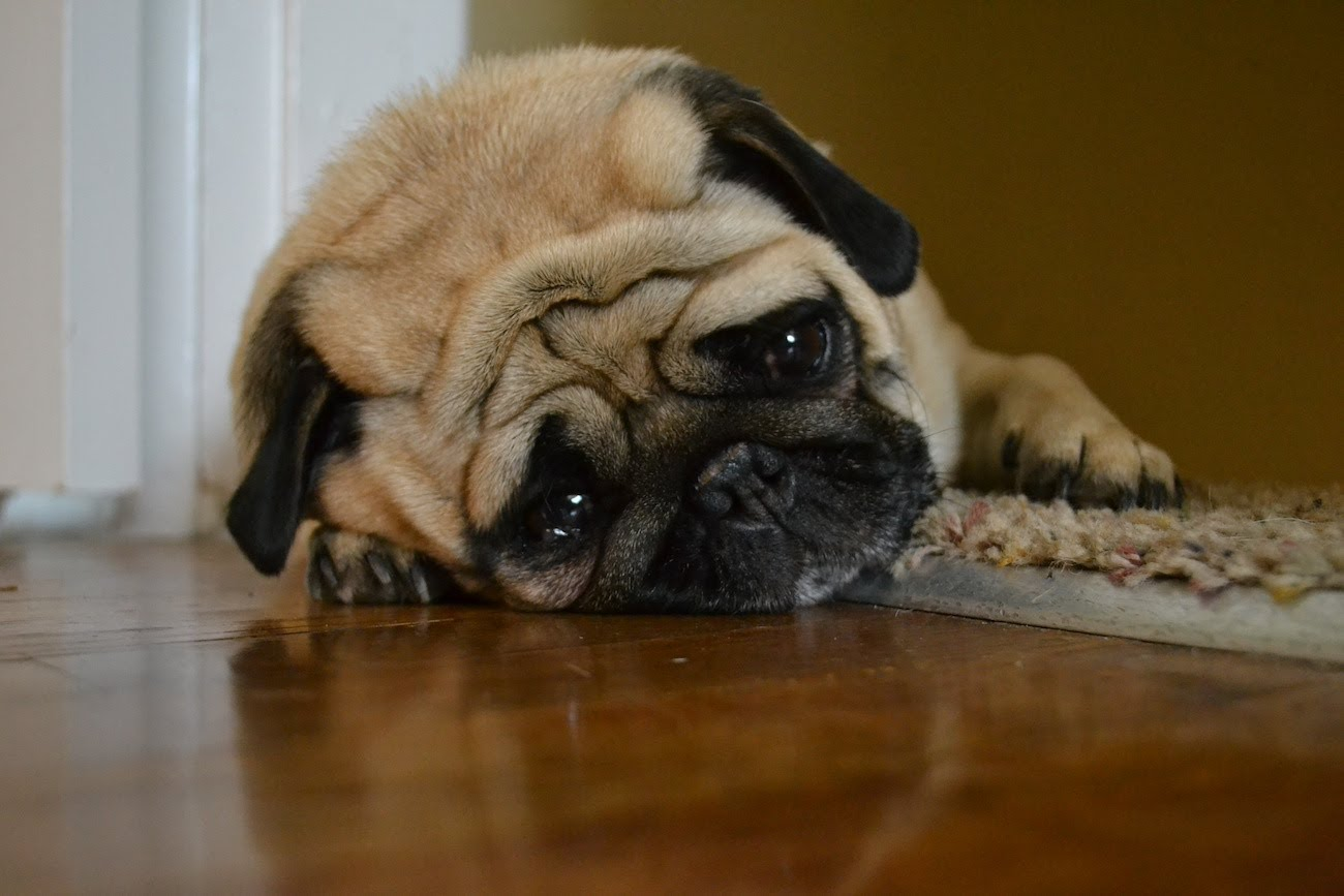 Is your dog sad?  We might know why.