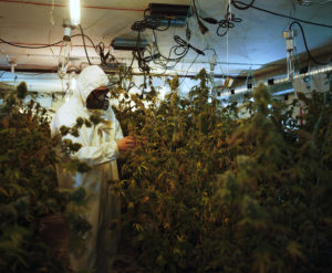 City Clears The Air On Pot Shop Policy
