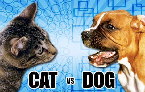 Dogs & Cats.  Who's smarter?