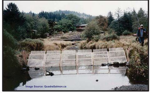 Carp Fence in Kal Lagoon Delayed
