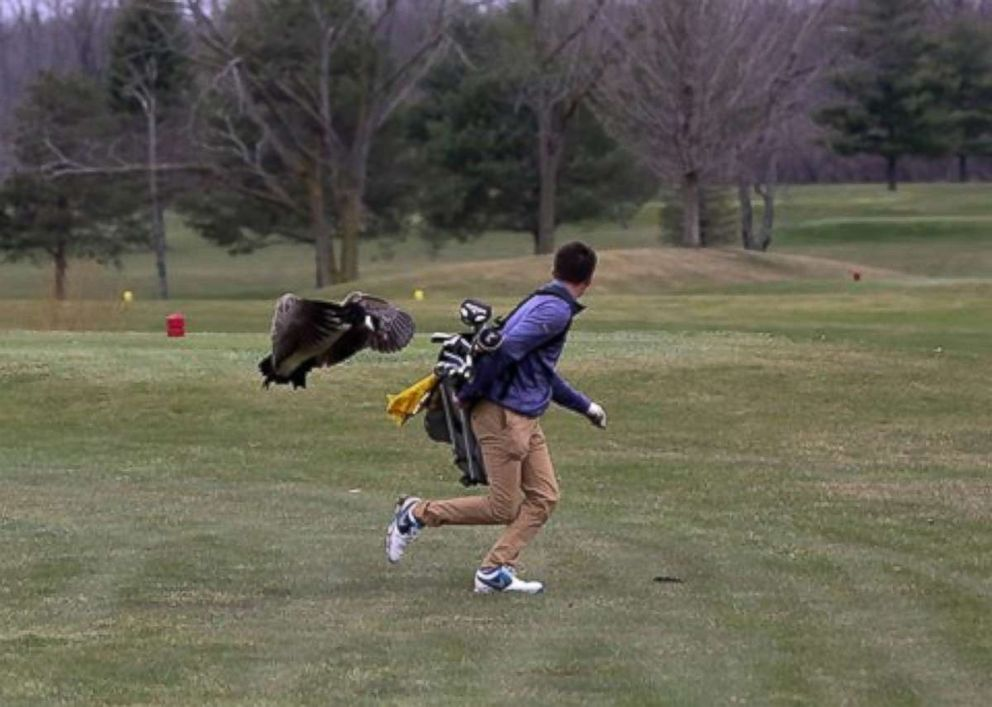 Not all 'birdies' in golf are harmless...