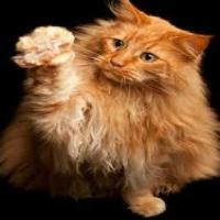 Cat Won't let Owner get Glass