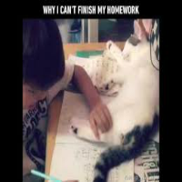 Why I can't Finish Homework