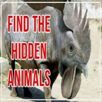 Find Hidden Animals