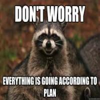 Raccoons Stealing Food