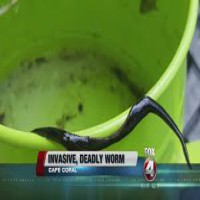 Potentially deadly flat worms