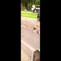 Drug Courier Car Accident