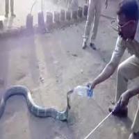 Thirsty Snake