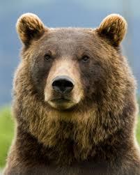 Mountain Bikers Encounter Brown Bear