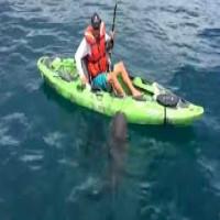 Shark Capsizes Kayak