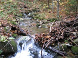 stream-debris