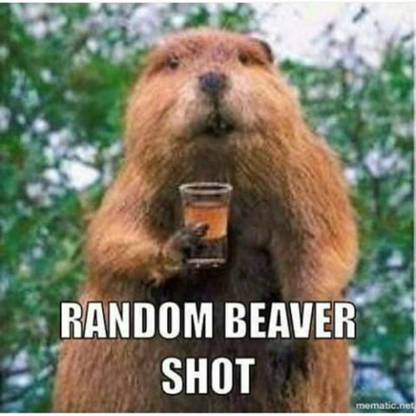 The Beaver our National Symbol