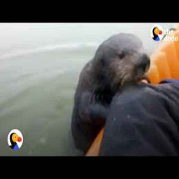 Otter Jumps On Kayak To Say Hello
