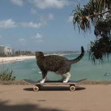 Cat Breaks World Record For Skateboarding