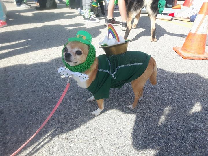 Power Patrol St Patricks Day Weekend