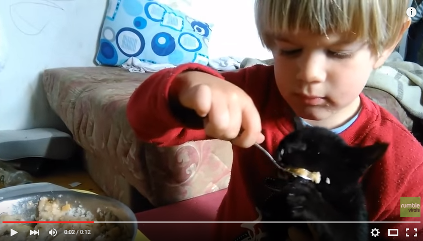 Toddler Makes Sure To Share His Oatmeal With His New Kitten - WATCH