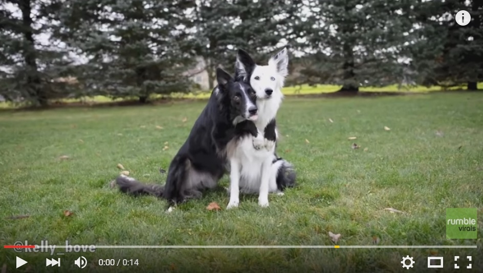 2 Dogs Take Their Friendship To A Stunning Level In These ADORABLE Couple Photos - WATCH