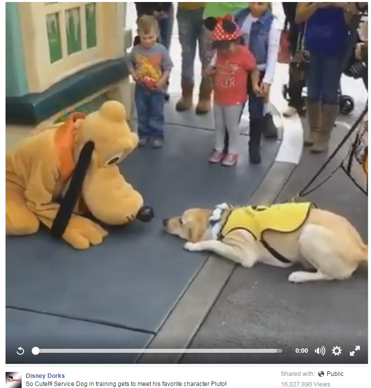 WATCH: This dog - meeting Pluto...ah-mazing!