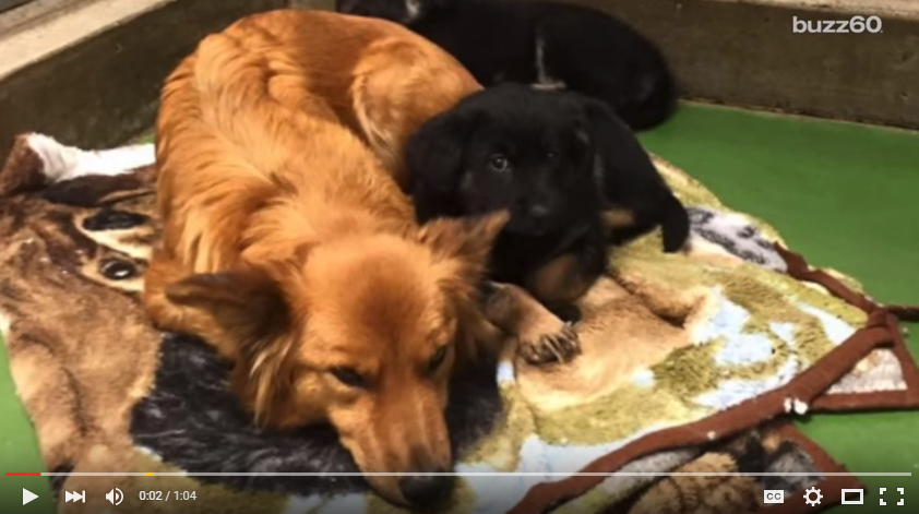 Puppy Motel In Alberta Going Viral As Motel 'Guest' Sneaks Out To Comfort Crying Puppies - WATCH