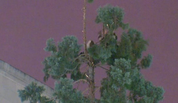 WATCH:#ManInTree is the latest viral sensation