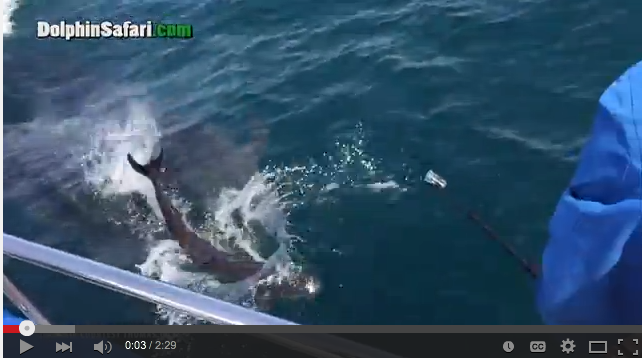 Whale Watchers Get The Ultimate Surprise When Whale Gives Birth Beside Boat - WATCH